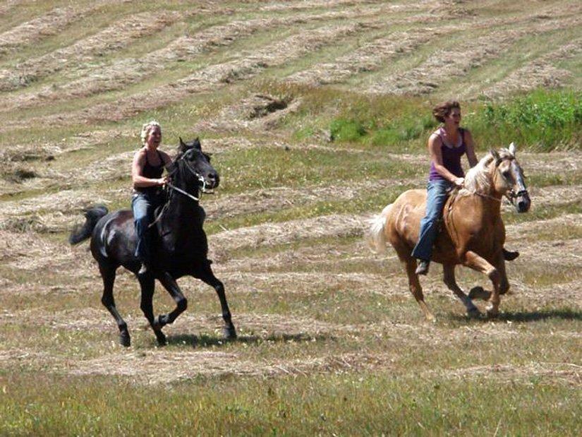Auberge Logpile - Équitation à proximité