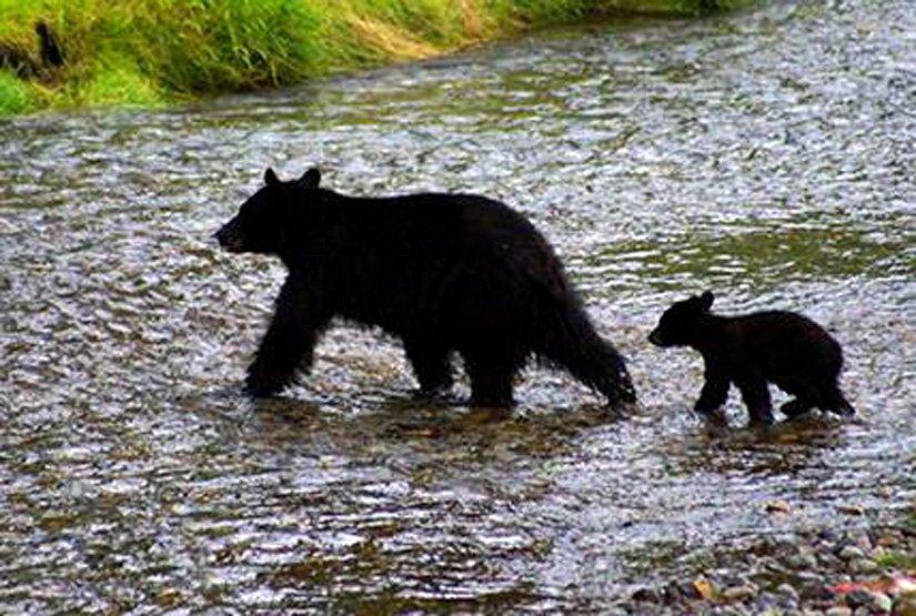 Auberge Ripley Creek - L'ours noir de la région