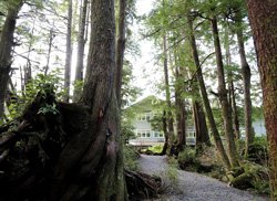 Jamie's Rainforest Inn  - Tofino, BC