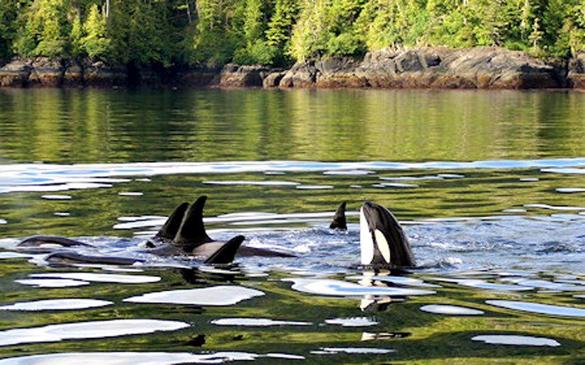 Quaterdeck Inn - Observation des baleines