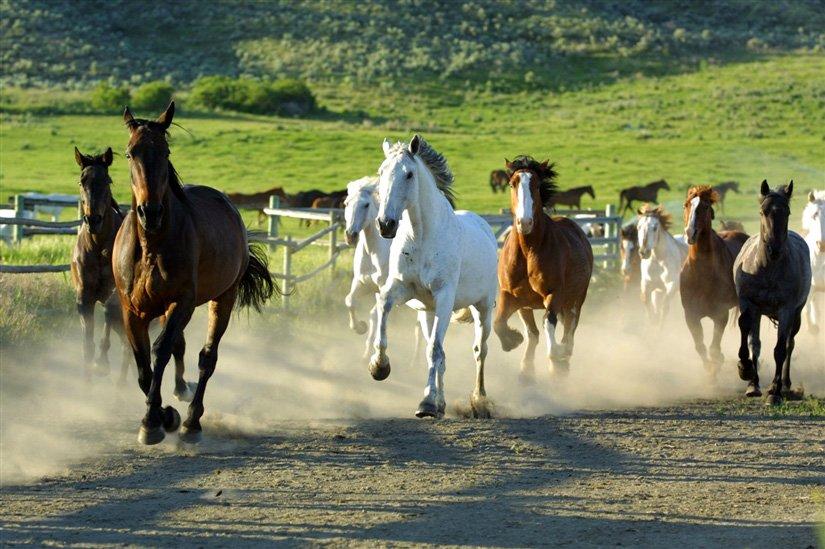 Ranch Sundance - Ashcroft, BC