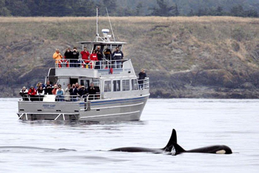 Royal Scot Hotel & Suites - À proximité, les baleines