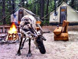 Dormir avec les caribous - campement