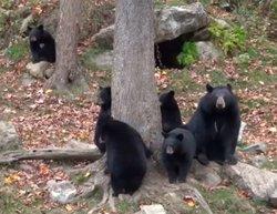 Observation de l'ours - Parc Omega