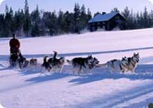 Voyages en traineau à chiens au Canada.