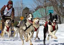 Course de traîneaux à chiens