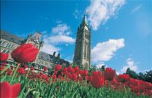 Tulipes au pied du Parlement d'Ottawa