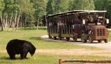 Ours noir et train du Zoo de Saint Félicien