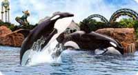 Spectacle d'orques à Marineland