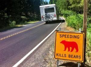Rencontre ours quoi faire