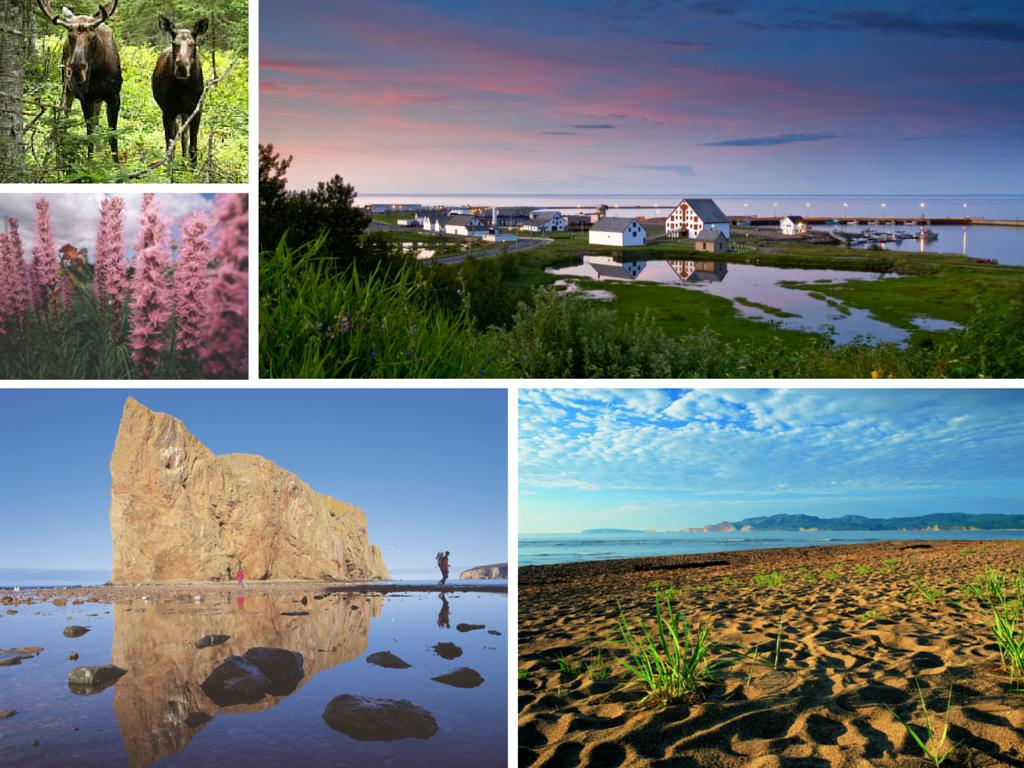 Est du Canada en 15 jours : Gaspésie