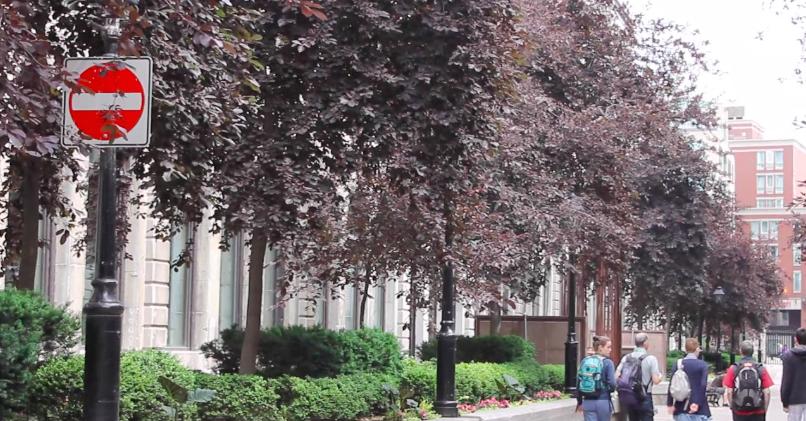 Authentik sur le terrain : À Montréal comme un Montréalais