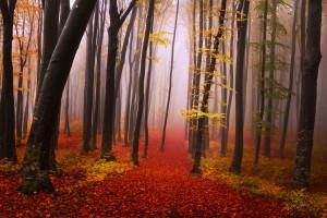 Forêt du Canada